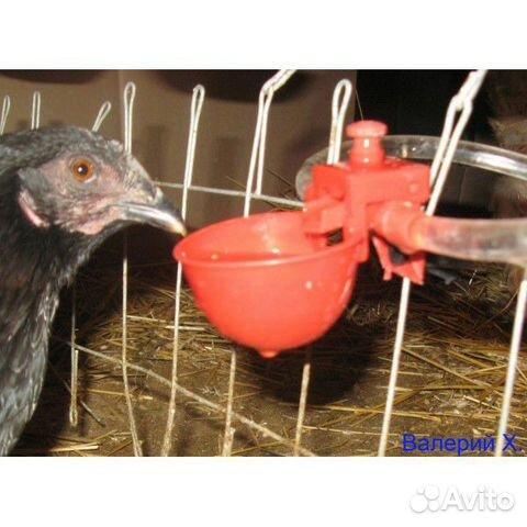 Чашечные поилки для кур