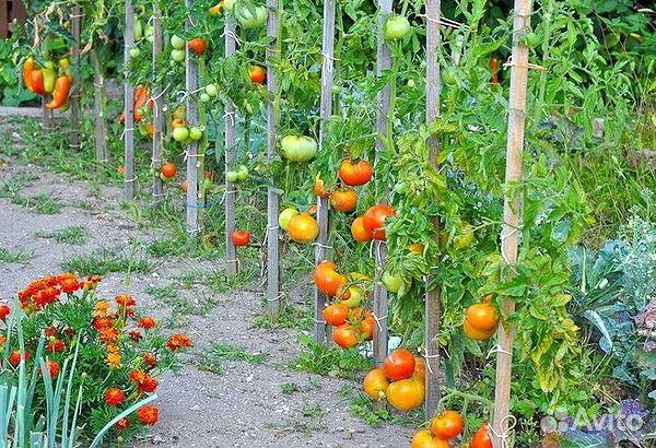 Грядки под помидоры
