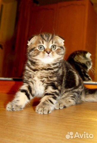 домов, снять котята на авито нефтеюганск исполнению