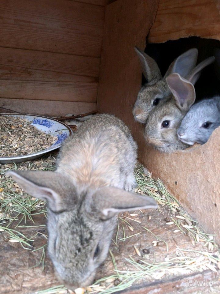 Крольчата в Самаре - фотография № 1