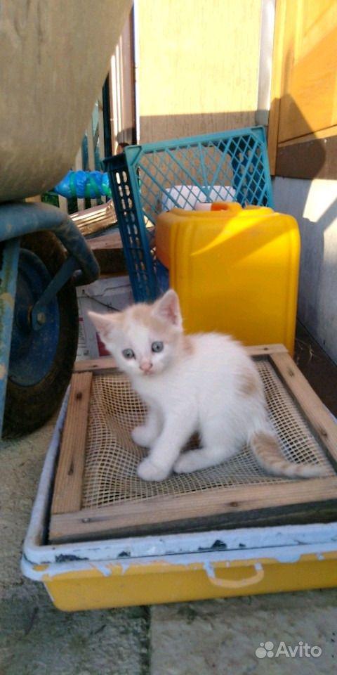 Отдам котят в Анапе - фотография № 8
