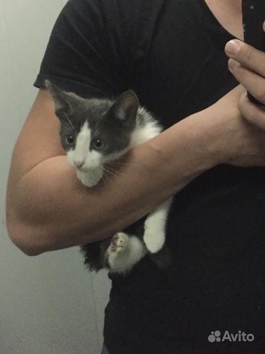 Котёнок в добрые заботливые руки