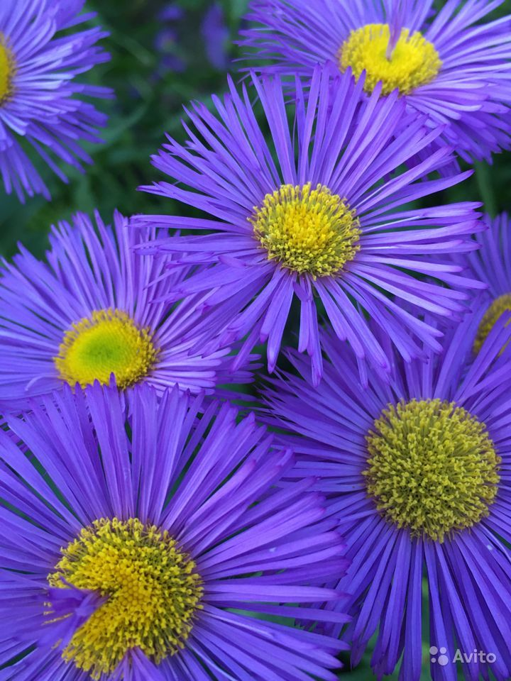 Цветы купить на Зозу.ру - фотография № 5