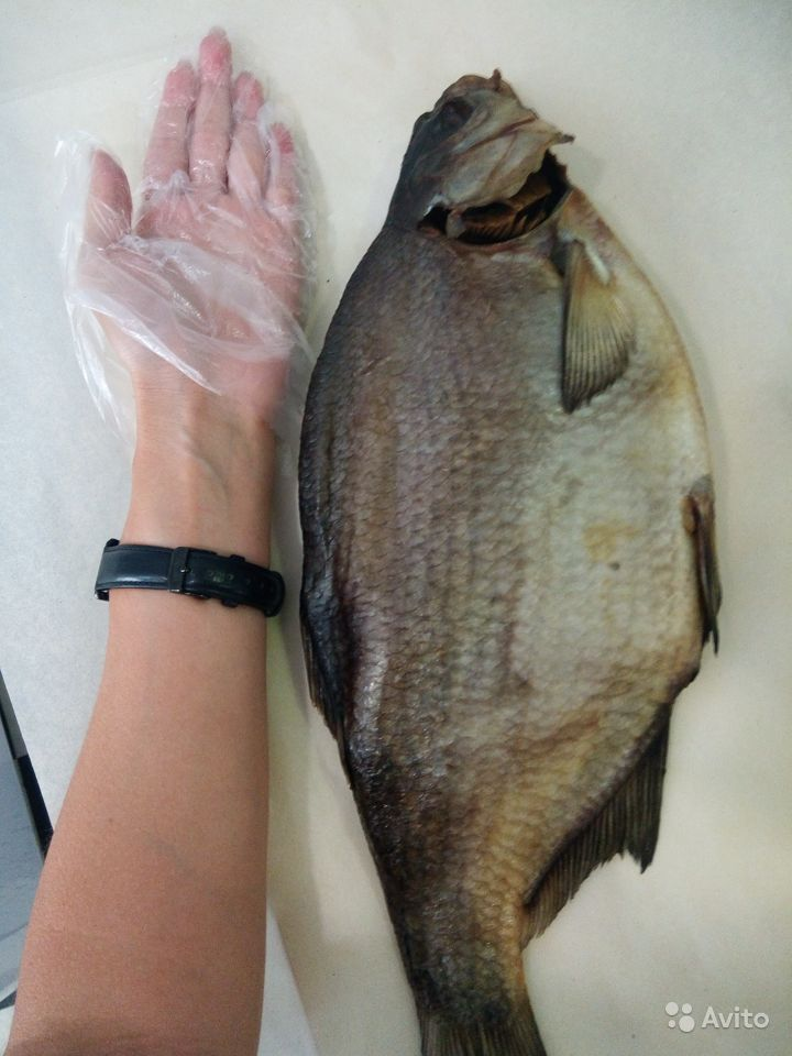 кругляк рыба на дону фото познакомились казани