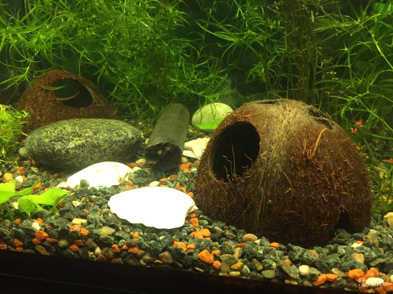 Декорации для аквариума купить на Зозу.ру - фотография № 1