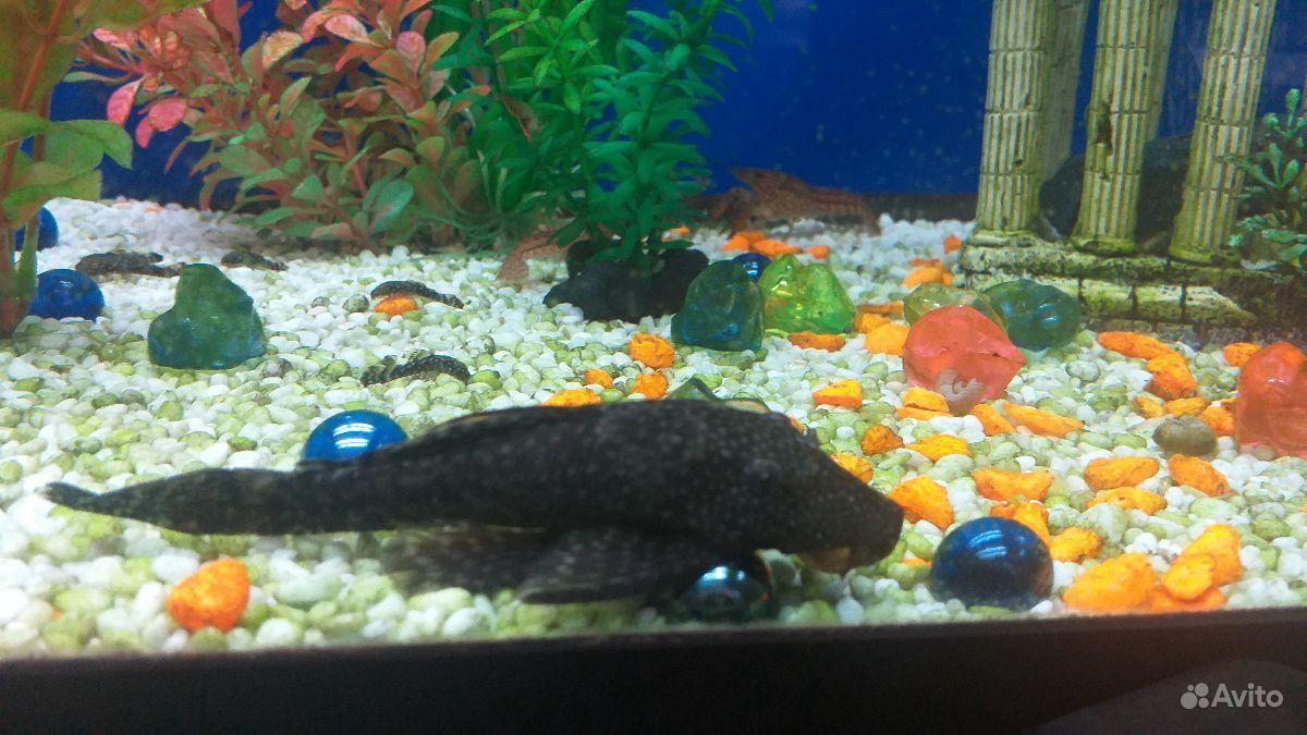 Рыба купить на Зозу.ру - фотография № 2