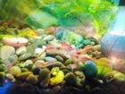 Аквариумные креветки и растения в аквариум
