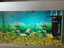Аквариумные рыбки авито абакан