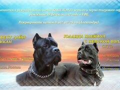Продажа собак в красноярске алабай на авито