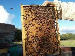 Пчелопакеты и улья
