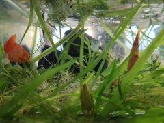 Рыбки, растения и улитки