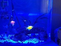 Лампа для аквариума светодиодная Barbus