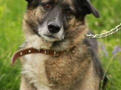 Деликатная красотка Даяна Собака в добрые руки