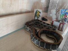 Змея,девочка