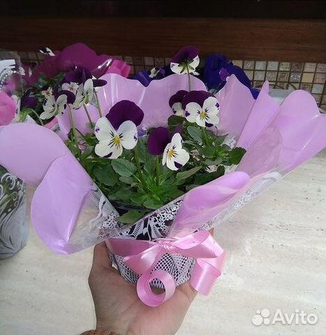 Авито подать объявление бесплатно продать цветы подать объявление работа на дому без регистрации