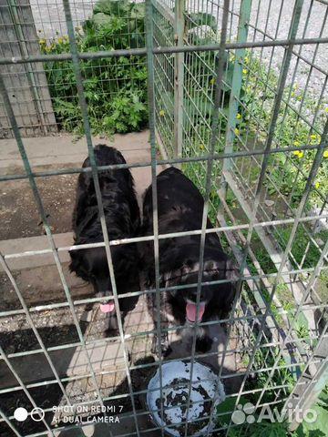 Сторожевая собака 89115334516 купить 2
