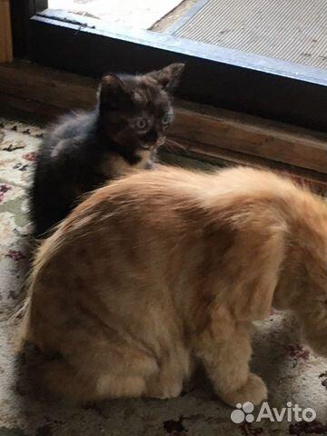 Кошечка  купить 2