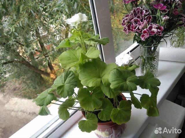 Самые красивые цветы для Вашего дома  купить 5