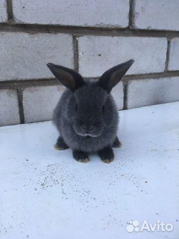 Dwarf rabbits  89997886395 buy 4