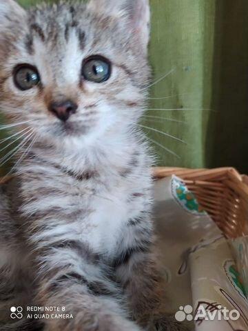 Котята ищут теплый дом  89867112072 купить 2