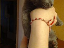 Отдам в хорошие руки котят(3 месяца)