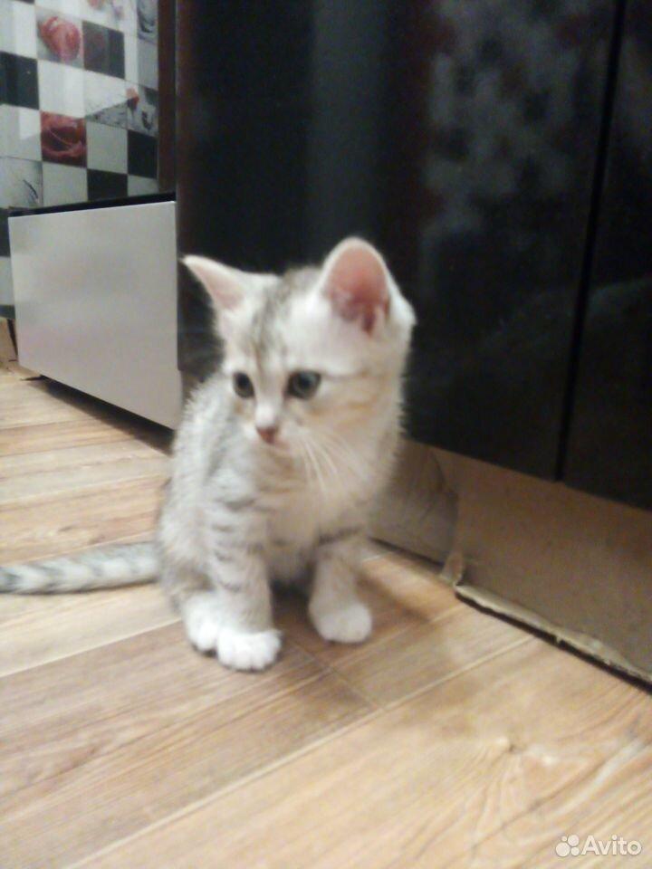 Отдам котят  89125546532 купить 8