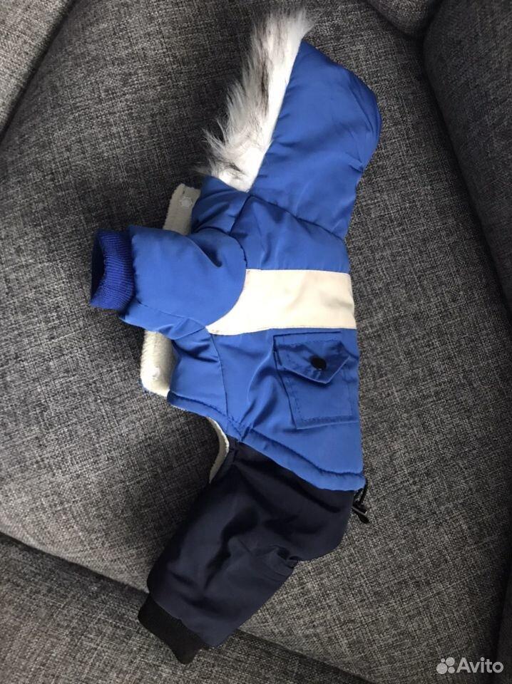 Одежда для собак  89137579987 купить 2