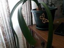 Растение в зеленом горшке