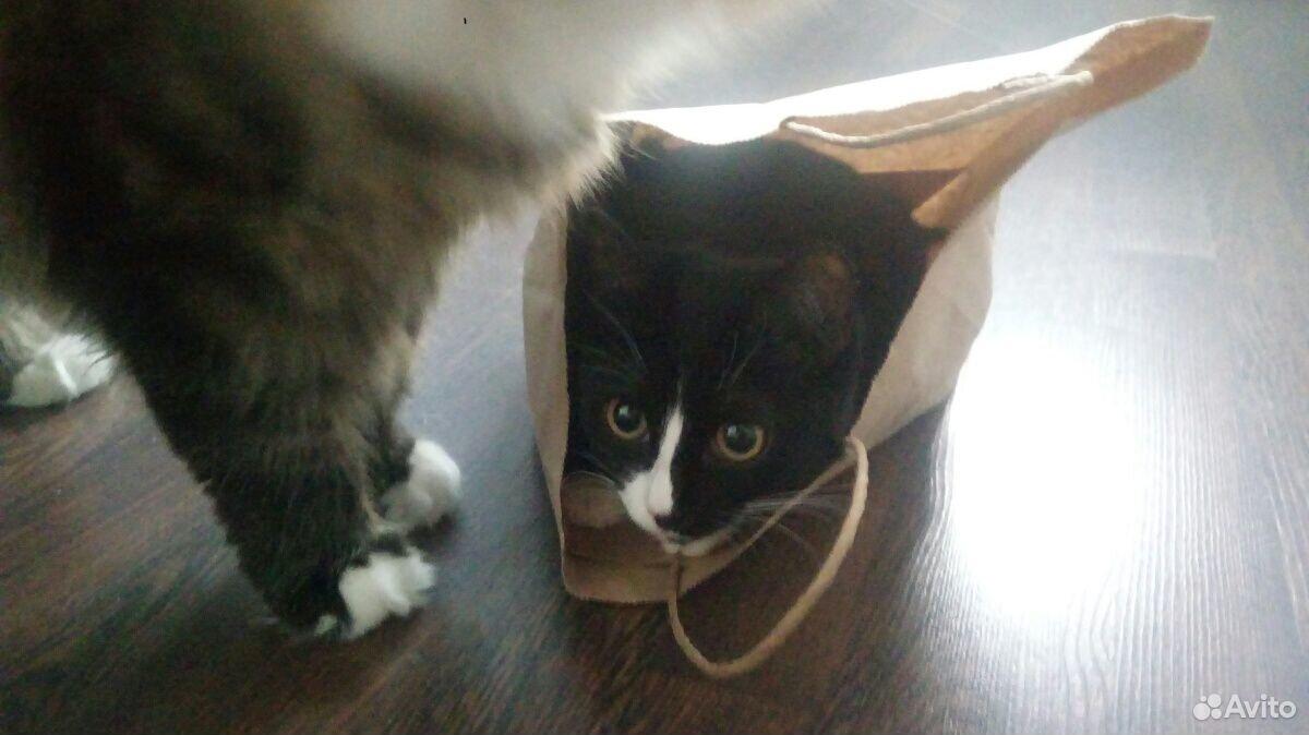 Кошка  89220421042 купить 2
