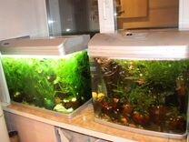 Аквариумы и Рыбы