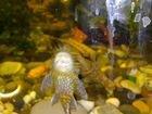 Хобби аквариум
