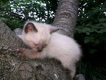 Отдам красивых и очаровательных котят