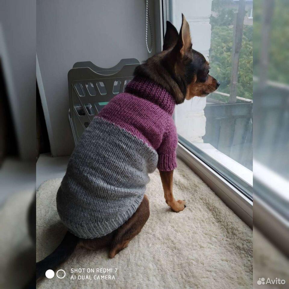 Одежда для собачки  89156512143 купить 5