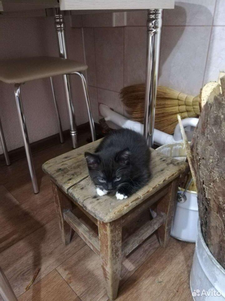 Котенок девочка  89831883735 купить 3